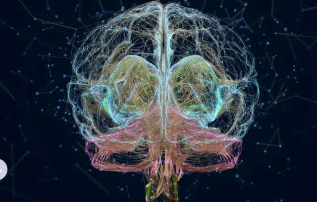 cerveaux