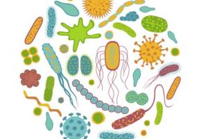 Au cœur des organes. Le microbiote intestinal
